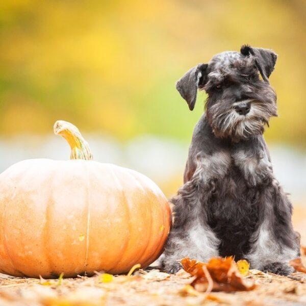 How to keep your dog calm on halloween night